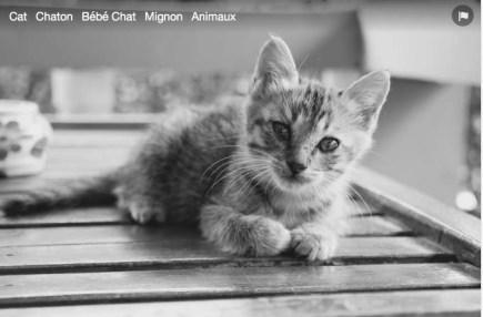 chaton-4
