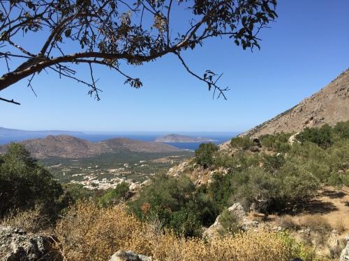 Panorama au pied du plus vieil olivier d'Europe, Kavousi en Crète.